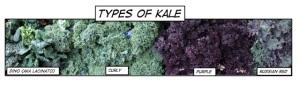 4typesKaleLabeled
